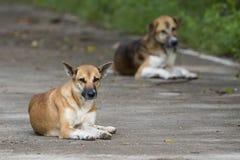 Beeld van een bruine hond stock foto