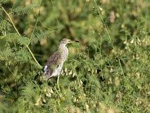 Beeld van een egretta stock foto