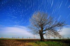 Beeld van een geïsoleerd boomsilhouet op een heuvel Royalty-vrije Stock Fotografie