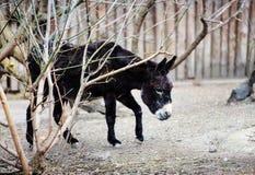 Beeld van een grappige ezel royalty-vrije stock foto's