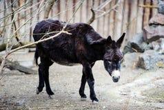 Beeld van een grappige ezel royalty-vrije stock foto