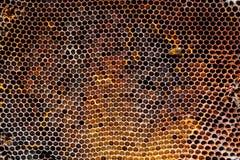 Beeld van een honingraat in close-up royalty-vrije stock afbeelding