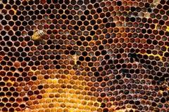 Beeld van een honingraat in close-up stock fotografie