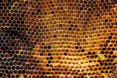 Beeld van een honingraat in close-up Stock Afbeelding