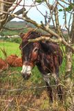 Beeld van een mooie ezel achter de omheining stock foto