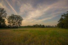 Beeld van een opheldering in een bos met bomen bij de kanten en sk Stock Fotografie