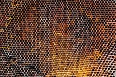 Beeld van een oude honingraat in close-up Royalty-vrije Stock Foto's