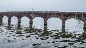 Beeld van een reiger op aquaduct in ruïnes met bogen in een rivier stock fotografie