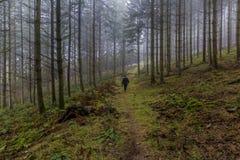 Beeld van een vrouw die onder lange pijnboombomen lopen in het bos stock afbeelding