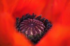Beeld van flora en fauna in macro Royalty-vrije Stock Foto's