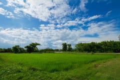 Beeld van groen padieveld met blauwe hemel Royalty-vrije Stock Fotografie