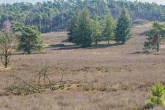 Beeld van groene bomen op een droog land stock fotografie