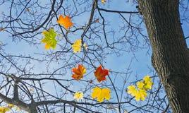 beeld van herfstboom in parkclose-up Royalty-vrije Stock Afbeelding