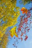 beeld van herfstboom in parkclose-up Stock Fotografie