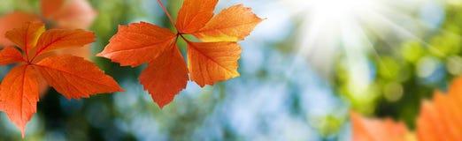 beeld van het close-up van de herfstbladeren Stock Afbeelding
