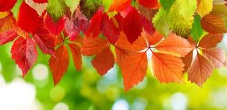 beeld van het close-up van de herfstbladeren Royalty-vrije Stock Afbeeldingen