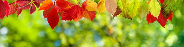 beeld van het close-up van de herfstbladeren Royalty-vrije Stock Fotografie