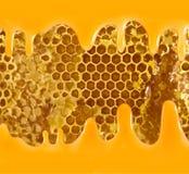 Beeld van honingraten en honingsclose-up Royalty-vrije Stock Afbeeldingen