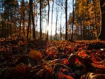 Beeld van kleurrijk de herfstblad in het bos met zonlicht stock foto's