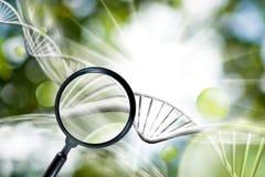 beeld van meer magnifier op ketting van DNA-achtergrond Stock Foto's