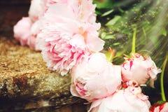 Beeld van mooi boeket van pioenen stock fotografie
