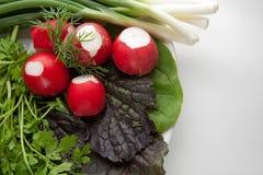 Beeld van plaat met gezonde voedselpeterselie, tuinradijs, basilicum Stock Fotografie