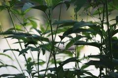 Beeld van takje met verse groene bladeren stock fotografie