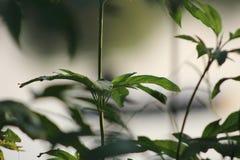Beeld van takje met verse groene bladeren stock foto's
