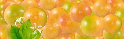 Beeld van vele heerlijk rijp sinaasappelenclose-up royalty-vrije stock fotografie