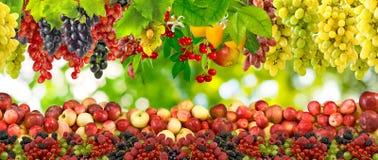 Beeld van vele vruchten close-up stock afbeelding