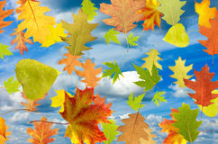Beeld van verschillende bladeren Stock Afbeeldingen