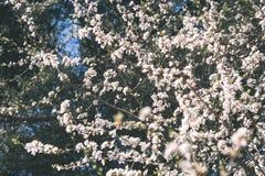 Beeld van weelderig vroeg de lentegebladerte - de trillende groene verse lente Royalty-vrije Stock Afbeeldingen