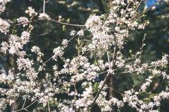 Beeld van weelderig vroeg de lentegebladerte - de trillende groene verse lente Royalty-vrije Stock Fotografie