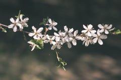 Beeld van weelderig vroeg de lentegebladerte - de trillende groene verse lente Stock Afbeelding