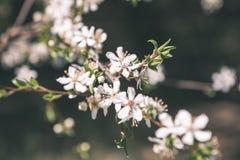 Beeld van weelderig vroeg de lentegebladerte - de trillende groene verse lente Stock Foto's