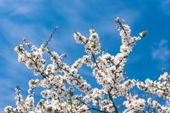Beeld van weelderig vroeg de lentegebladerte - de trillende groene verse lente Royalty-vrije Stock Afbeelding