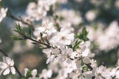 Beeld van weelderig vroeg de lentegebladerte - de trillende groene verse lente Royalty-vrije Stock Foto's