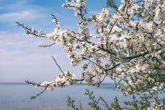 Beeld van weelderig vroeg de lentegebladerte - de trillende groene verse lente Royalty-vrije Stock Foto