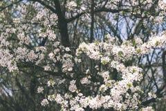 Beeld van weelderig vroeg de lentegebladerte - de trillende groene verse lente Stock Foto