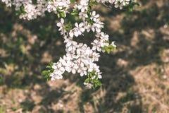 Beeld van weelderig vroeg de lentegebladerte - de trillende groene verse lente Stock Fotografie