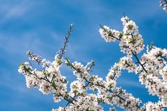 Beeld van weelderig vroeg de lentegebladerte - de trillende groene verse lente Stock Afbeeldingen