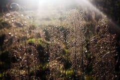 Beeld van wilde bloemen en zonstralen stock foto