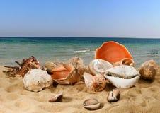 beeld van zeeschelpen op het zand tegen het hemelclose-up stock afbeeldingen