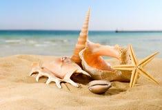 beeld van zeeschelpen op het zand tegen het hemelclose-up stock foto