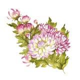Beeldboeket van chrysant De hand trekt waterverfillustratie Stock Afbeelding