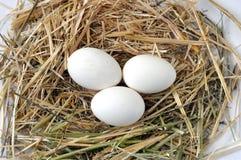 Beelden van binnenlandse hanen, beelden van haan en kippen, beelden van natuurlijke organische dorpskippen, natuurlijk-gevoed kip Stock Foto