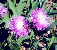 Beelden van bloemen en bijenclose-up Stock Afbeelding