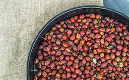 Beelden van rozebottelfruit droog in een dienblad, drogende rozebottel, drogende rozebottel om rozebottelthee te drinken Royalty-vrije Stock Afbeelding
