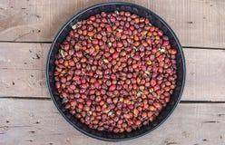 Beelden van rozebottelfruit droog in een dienblad, drogende rozebottel, drogende rozebottel om rozebottelthee te drinken Royalty-vrije Stock Fotografie