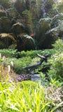 Beeldhouwwerk bij de Botanische Tuinen van Singapore Royalty-vrije Stock Afbeelding